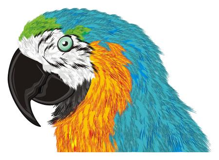 head of blue ara