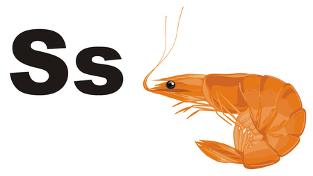 orange shrimp and black letters s Stock Photo