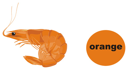 orange shrimp is orange
