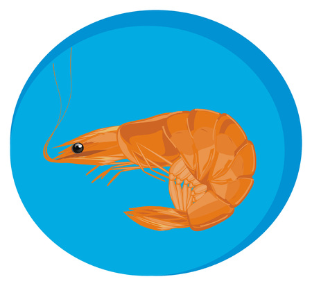 one orange shrimp and blue banner Stock Photo
