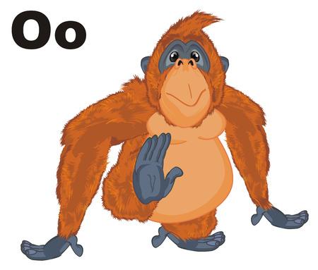 orangutan and letters o