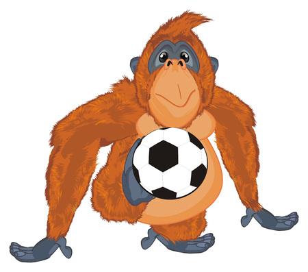 orangutan hold a soccer ball Фото со стока