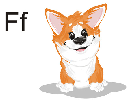 little corgi and letters f