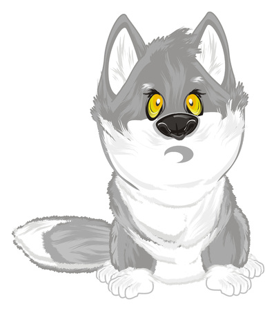 surprise wolf sit Stock Photo