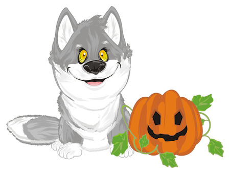 wolf with pumpkin