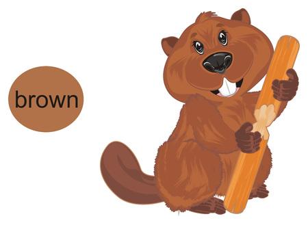 beaver is brown