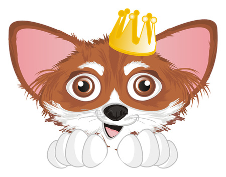snout of chihuahua with crown Imagens