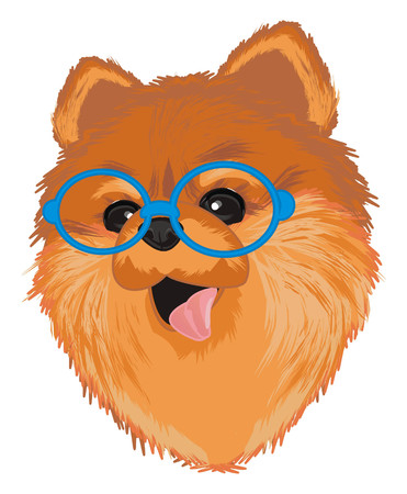 muzzle of spitz in blue glasses
