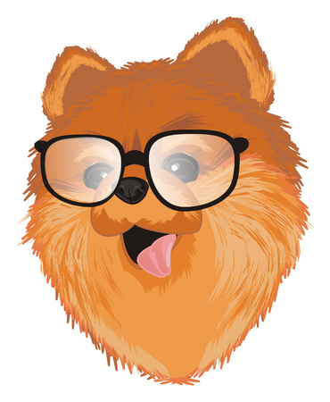 muzzle of spitz in glasses Banco de Imagens