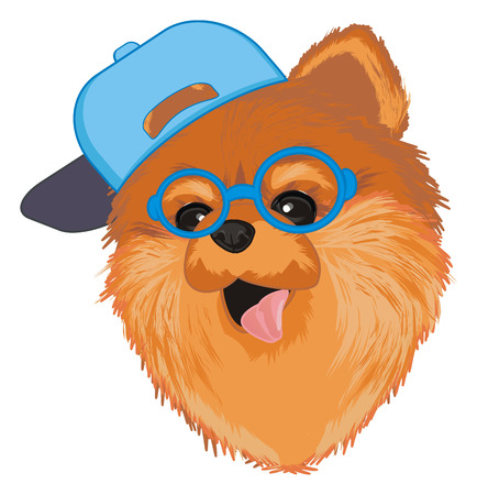 muzzle of spitz in cap and glasses