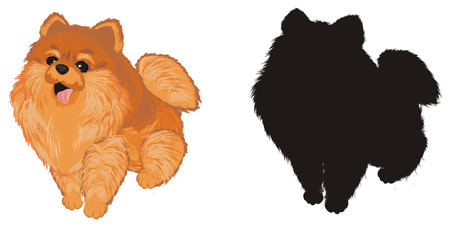 colored and solid black spitz Imagens