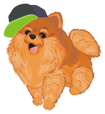 spitz with cool cap