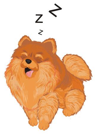 spitz sit and sleep 스톡 콘텐츠