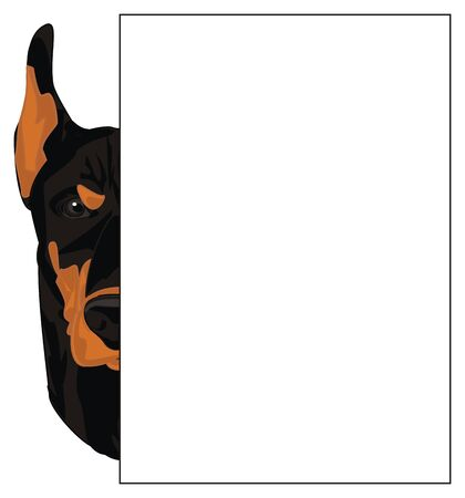face of doberman and poster
