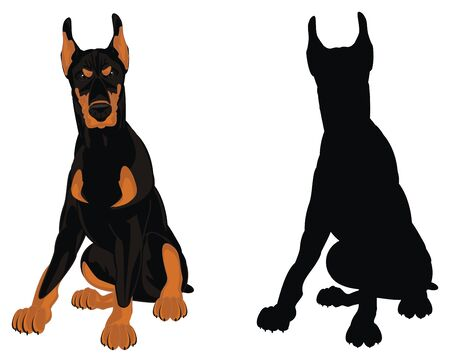 doberman and solid black shadow