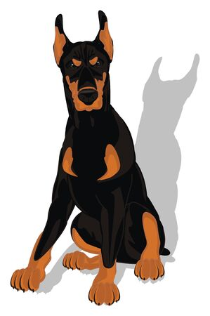 doberman and his shadow