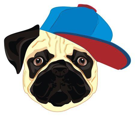 pug in blue cap