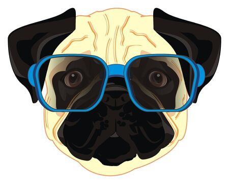 pug in sunglasses