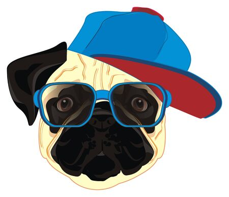 pug in cap and glasses