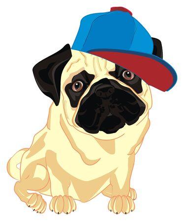 pug boy in blue cap