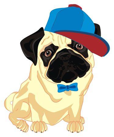 cute pug boy