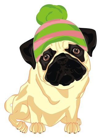 pug in winter hat sit