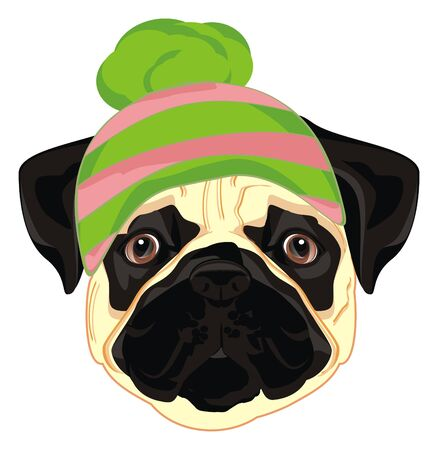 pug in winter hat