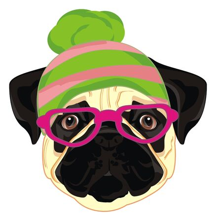 face of pug in hat and glasses