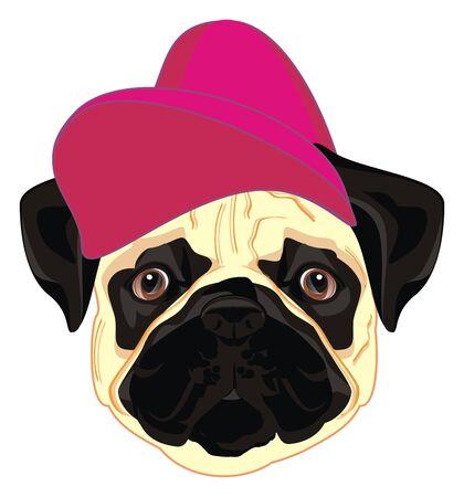 pug in cool cap
