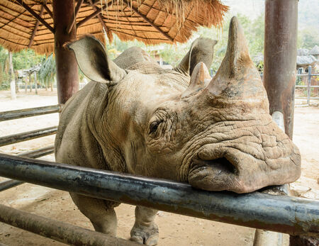 resentful: Rhino is resentful but hidden animals Stock Photo