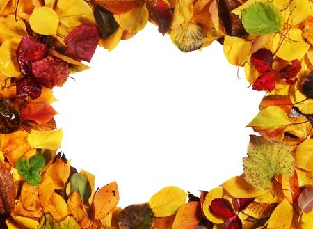 Autumn leaf frame closeup isolated on white background Stock Photo - 8650904