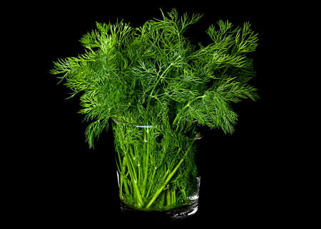 green herbs: Dill aromatic herb closeup isolated on black background