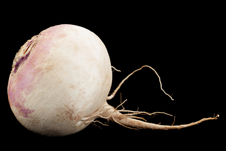 White big radish slice vegetable closeup isolated on black background