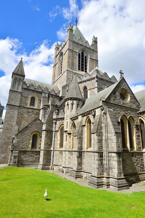 Christ Church Cathedral in Dublin with a seagull standing in the front lawn. Stock Photo