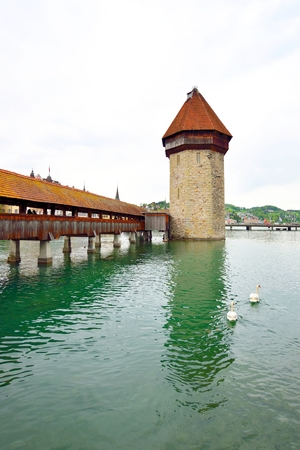 Chapel Bridge and two swans in Lucerne, Switzerland
