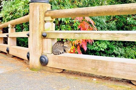 Cute cat sitting on wooden bridge railing, Kyoto, Japan