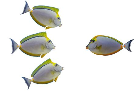 Three excited fishes are talking to one beautiful fish. A highly versatile conceptual image