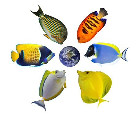 acanthurus leucosternon: Six tropical fishes around the globe showing North America and Pacific. Isolated on white. Earth image courtesy of NASA http:visibleearth.nasa.gov Stock Photo