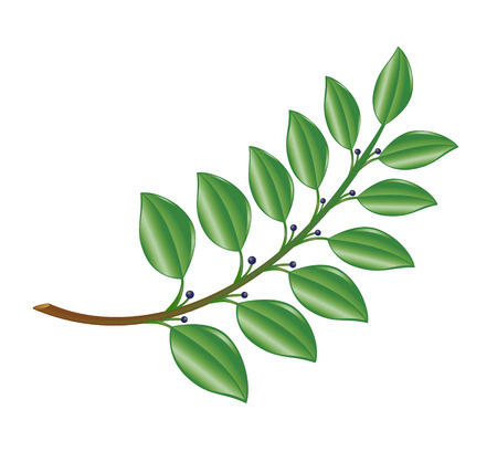 Laurel-branch. Vector-Illustration.