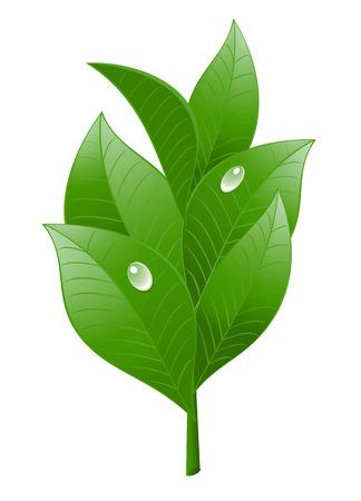 thé de feuilles sur fond blanc. Vector-Illustration Banque d'images - 4486759
