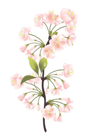 Sakura drzewa. Vector-Illustration