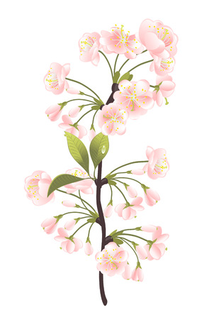 oriental vector: Sakura tree. Vector-Illustration