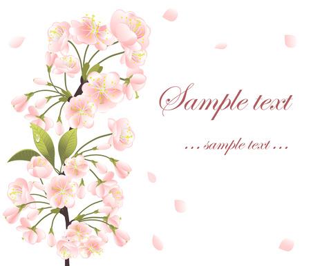 sakura arbol: Antecedentes con sakura �rbol. Ilustraci�n de vector