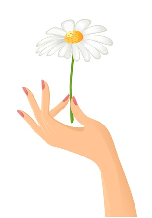 Female hand with camomile. Vector-Illustration Stock Vector - 10288982