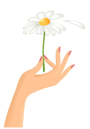 fortune flower: Female hand with camomile. Vector-Illustration Illustration