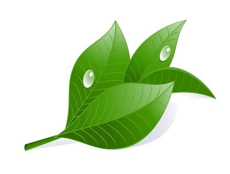 Groene thee bladeren met druppels.