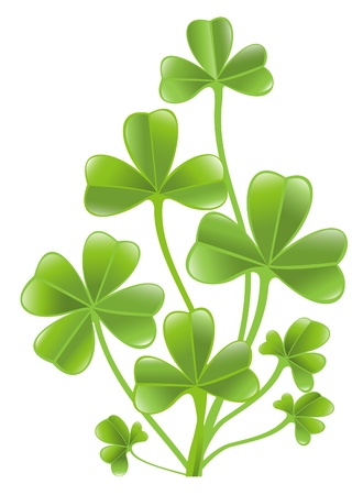 fourleafed: Clover leafs isolated on the white background.