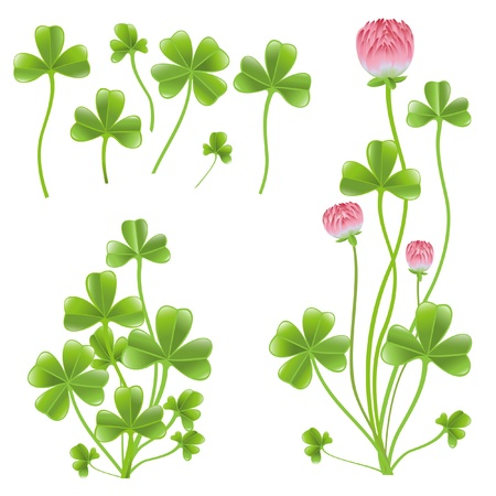 Set of clover leafs isolated on the white background. Vector