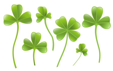 lucky clover: Set of clover leafs isolated on the white background. Illustration