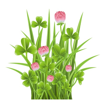 Green grass with clover Vector